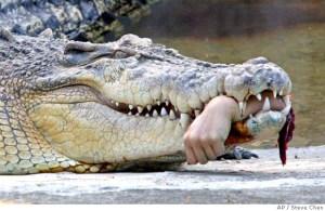 mn_croc_attack_xtpe801